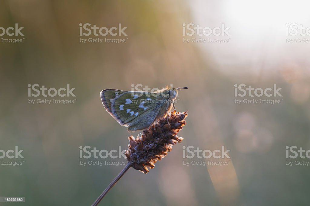 Butterfly Summer stock photo