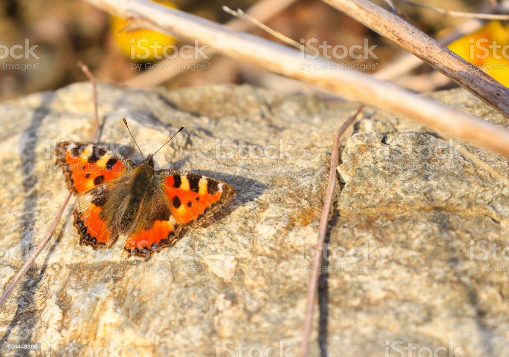 Butterfly taking a Sunbath stock photo