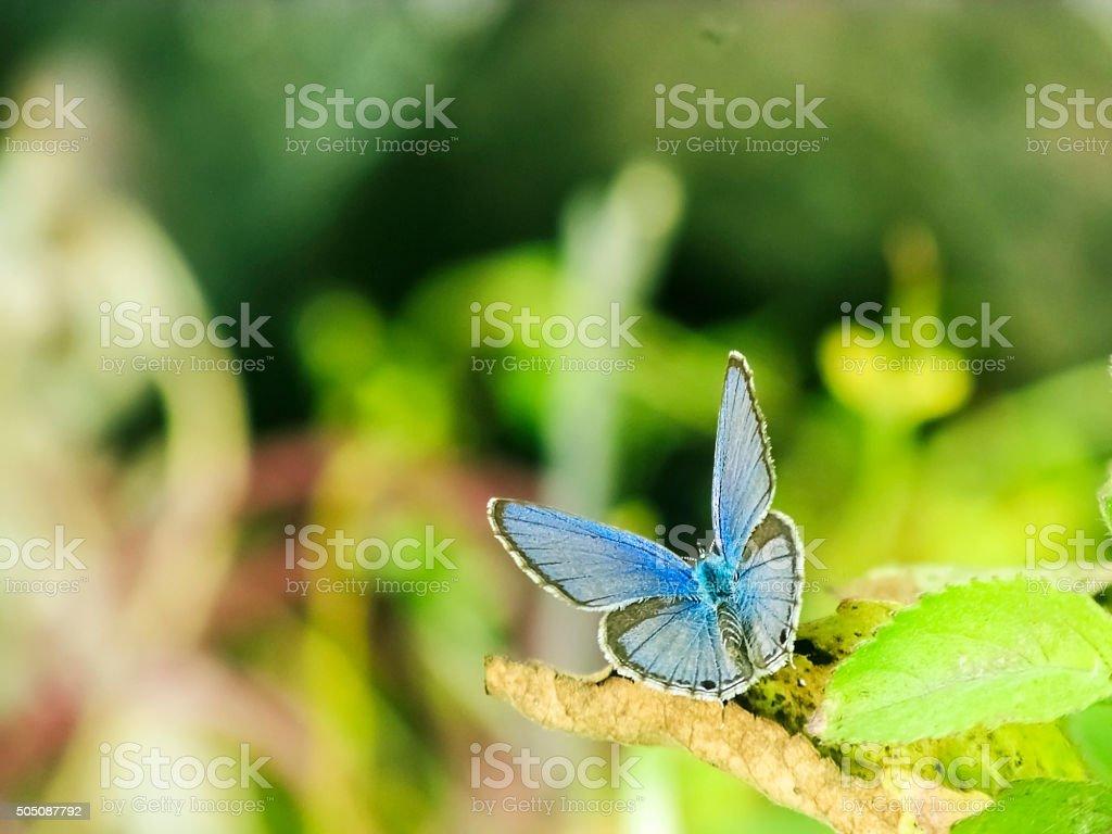 Butterfly taking Sunbath stock photo