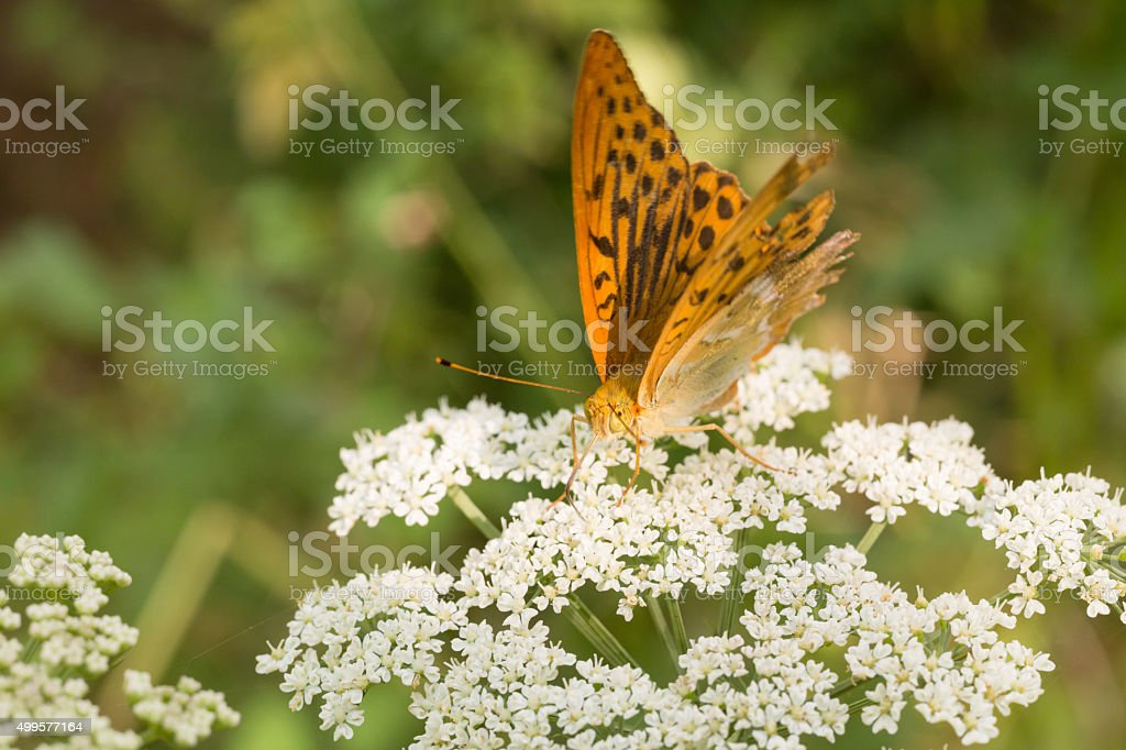 Butterfly Tenderness stock photo