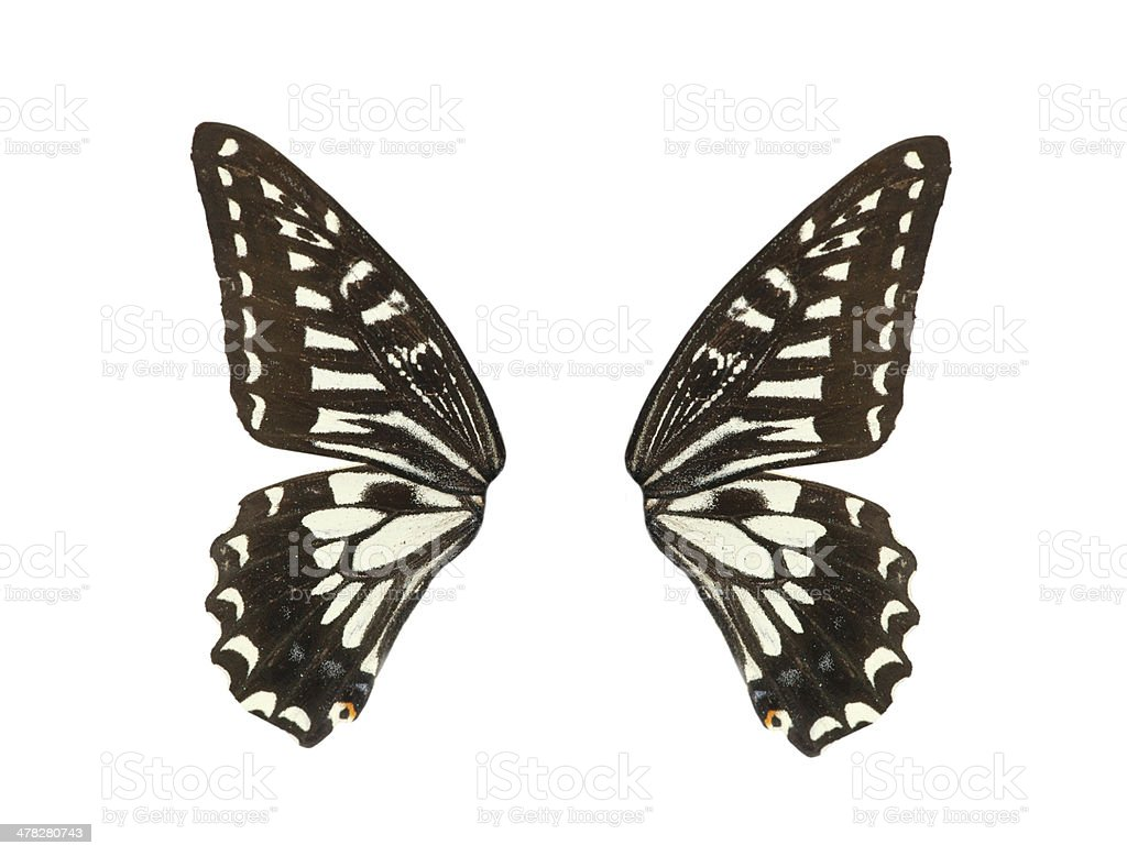 butterfly wing royalty-free stock photo