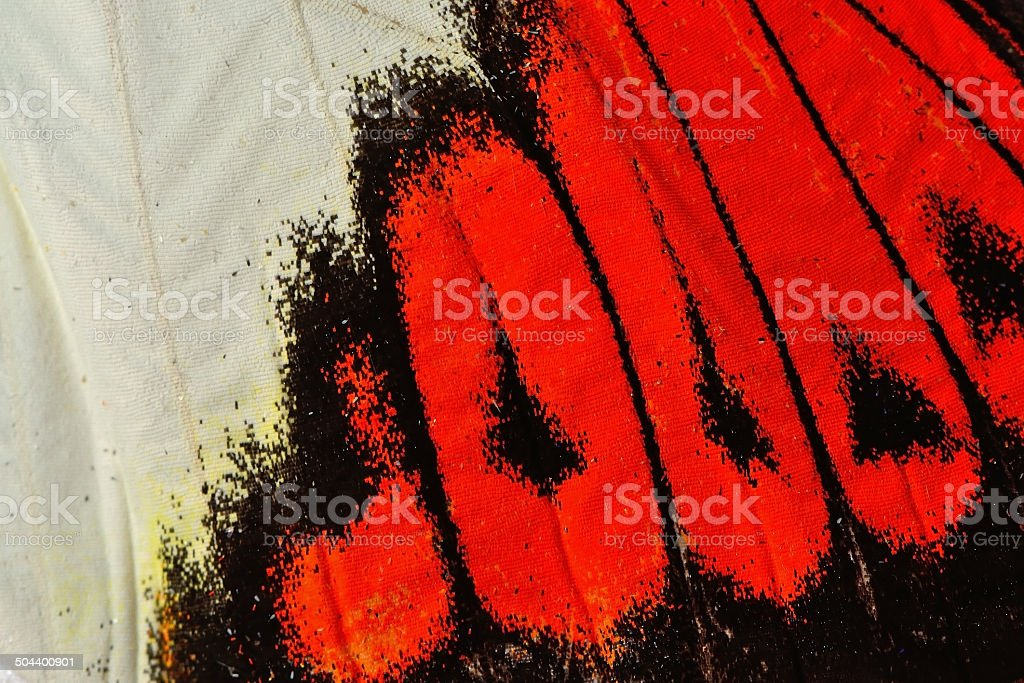 butterfly wing stock photo