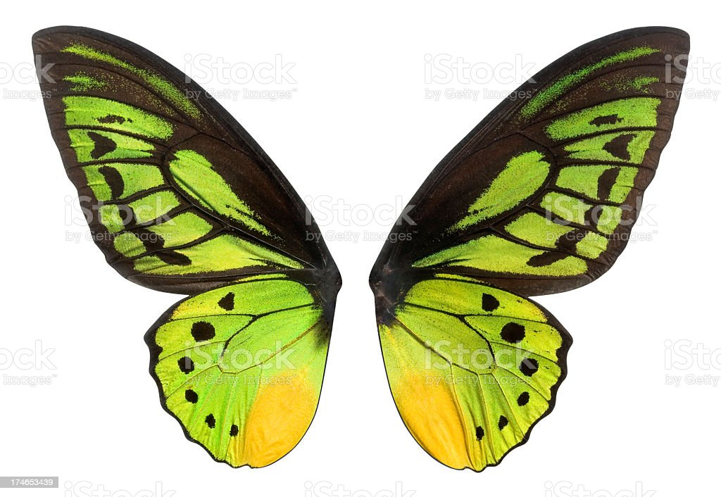 Butterfly Wings in Green, Black and Yellow. Clipping Path. stock photo