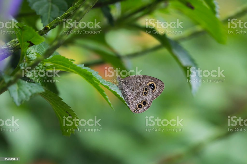 Butterfly with leaves stock photo