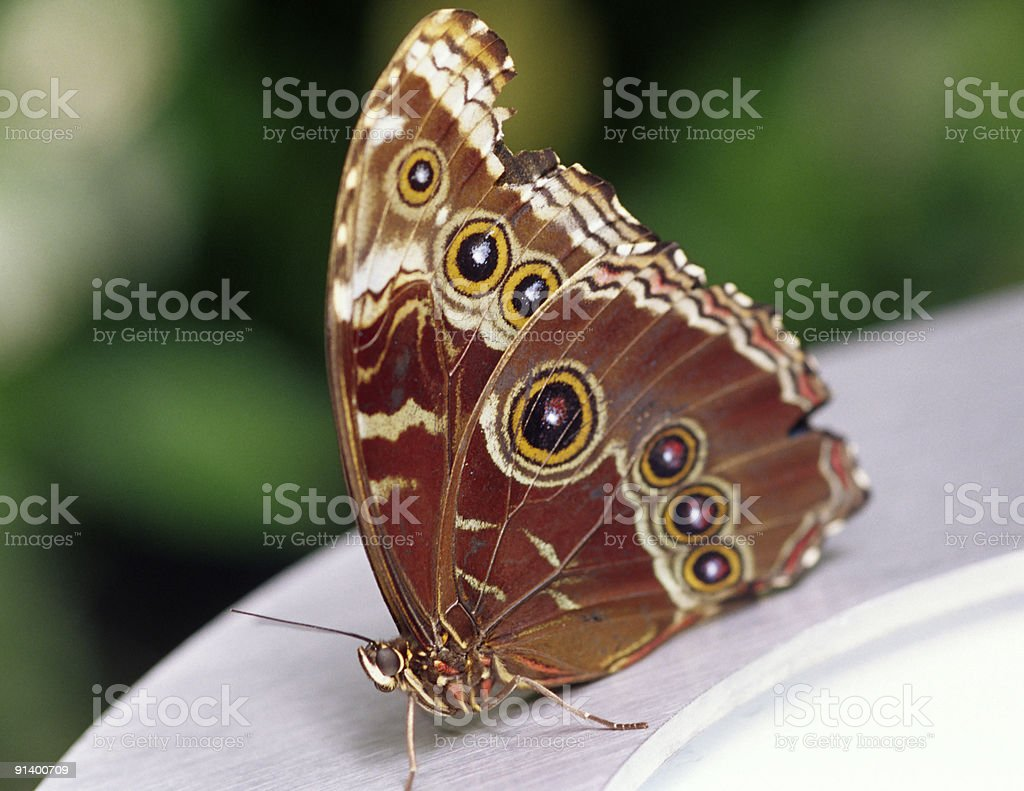 Butterfly with rings stock photo
