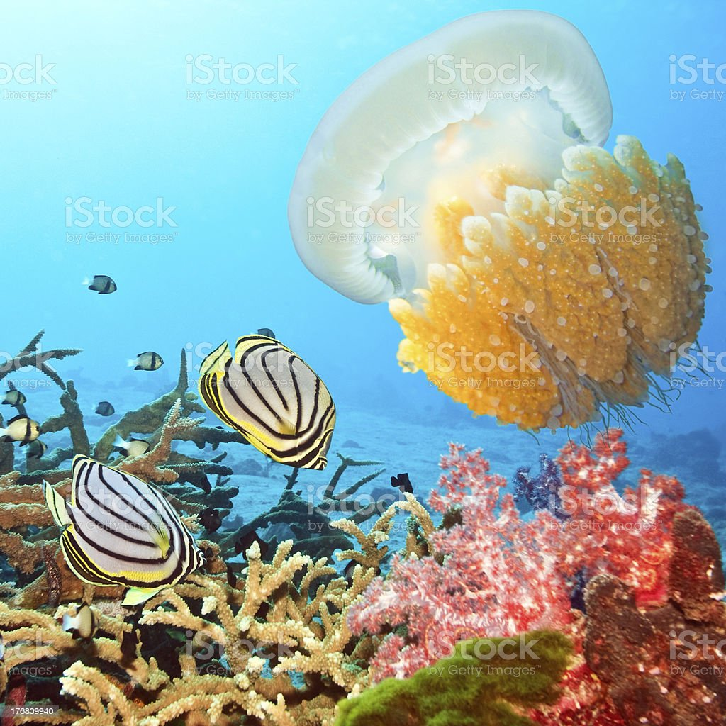 Butterflyfishes and jellyfish royalty-free stock photo