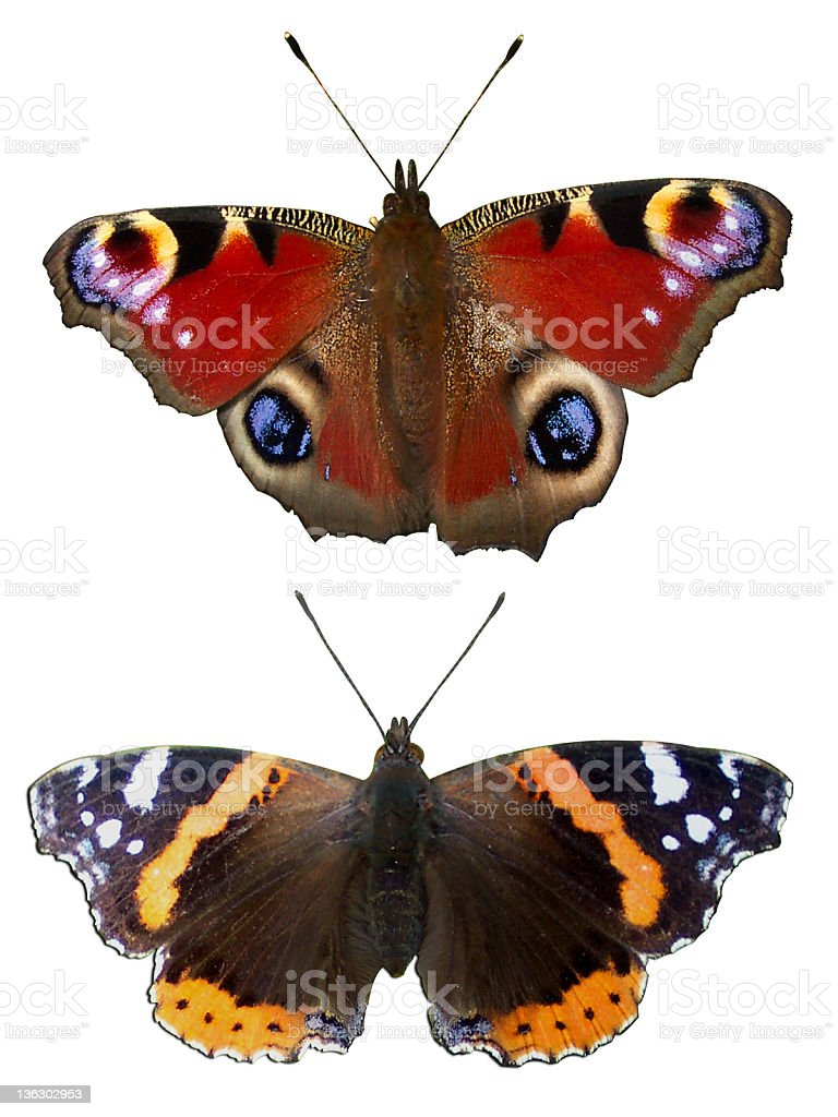 Butterflys royalty-free stock photo
