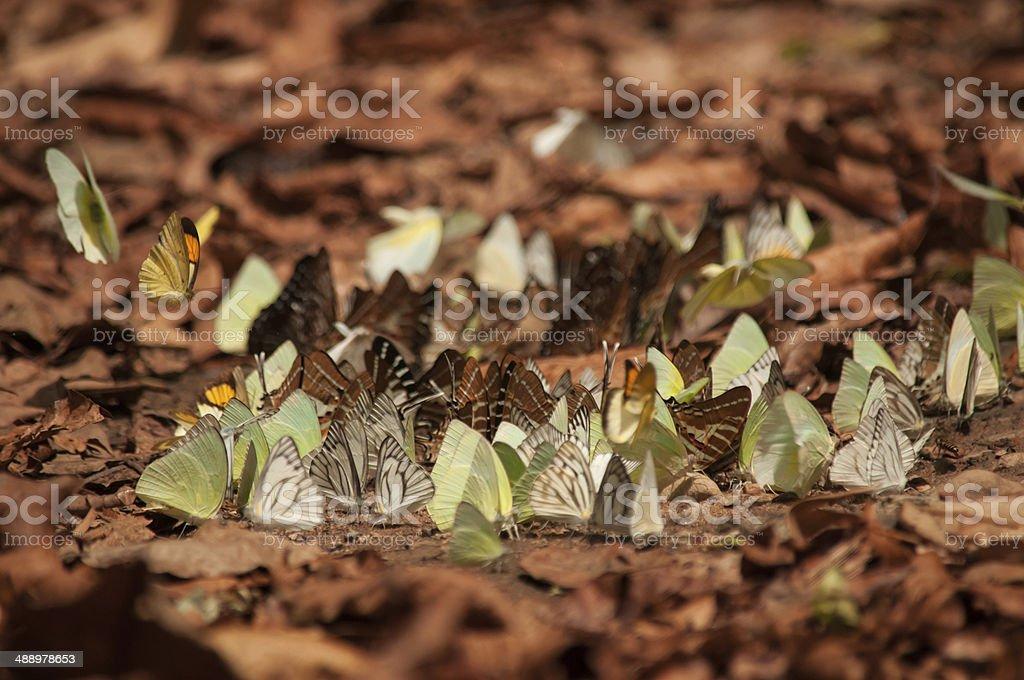 butterflys stock photo