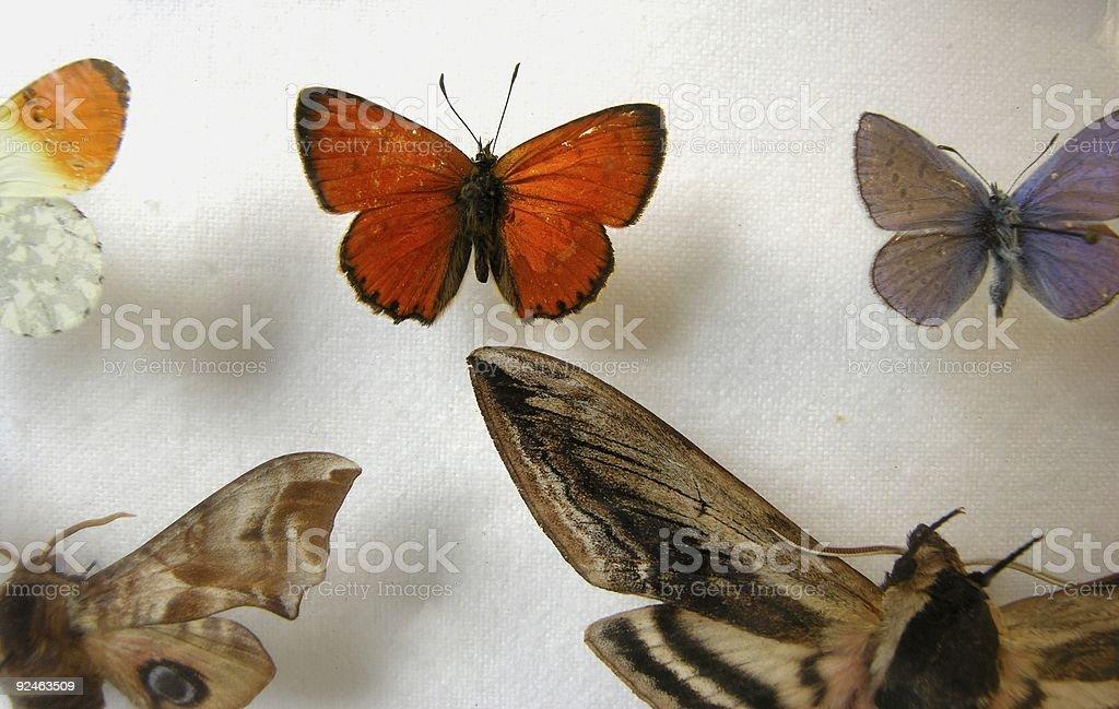 Butterflys royalty-free stock photo