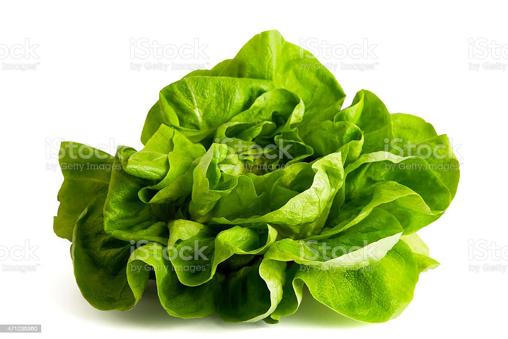 Butterhead lettuce isolated on white. stock photo