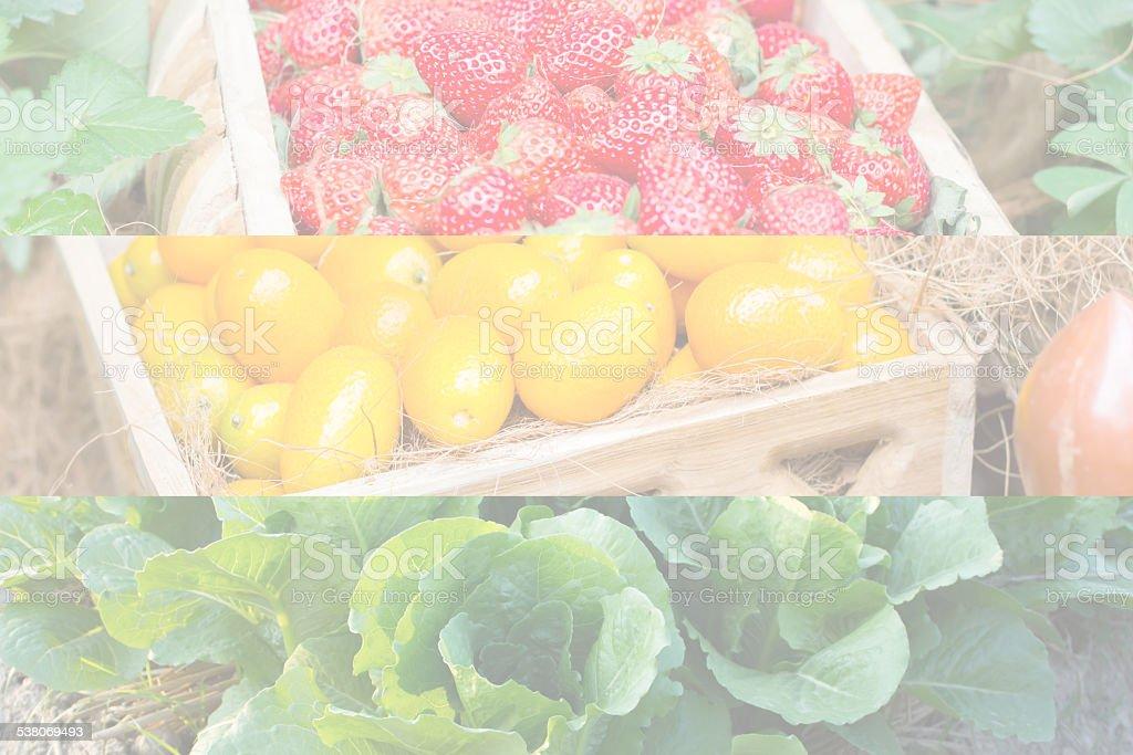 Butterhead Lettuce,kumquat,str awberry stock photo