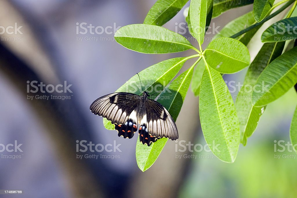 Butterly on a leaf royalty-free stock photo