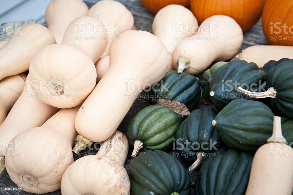 Butternut squash, acorn squash and pumpkins stock photo