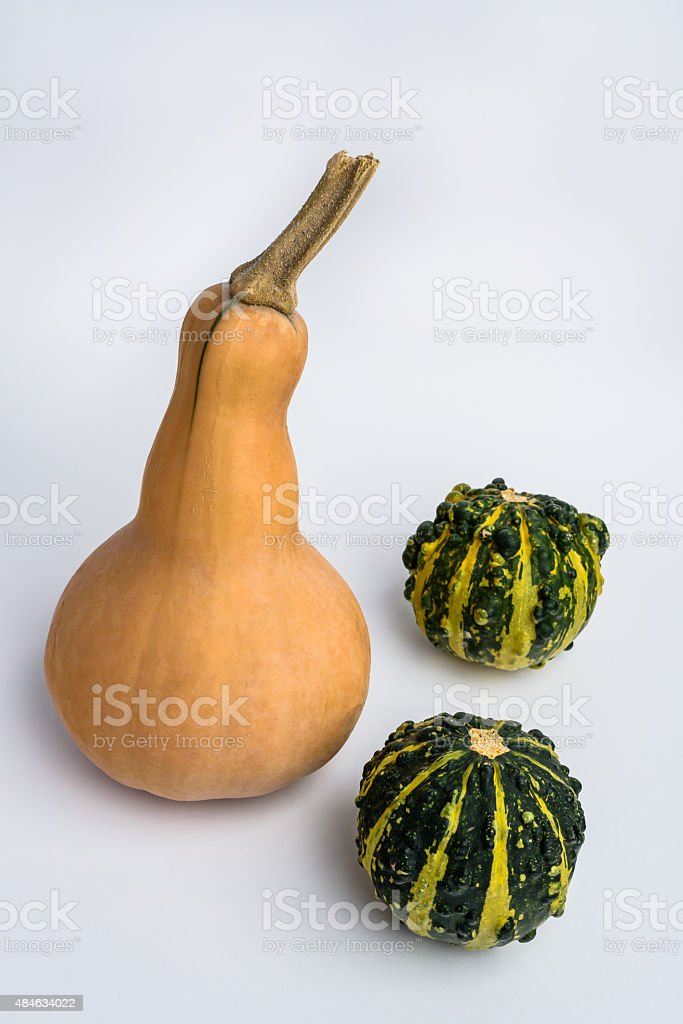 Butternut squash with two decorative pumpkins on white backgroun stock photo