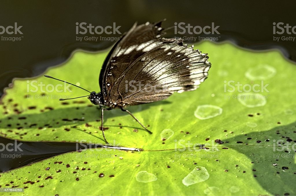buttewrfly royalty-free stock photo