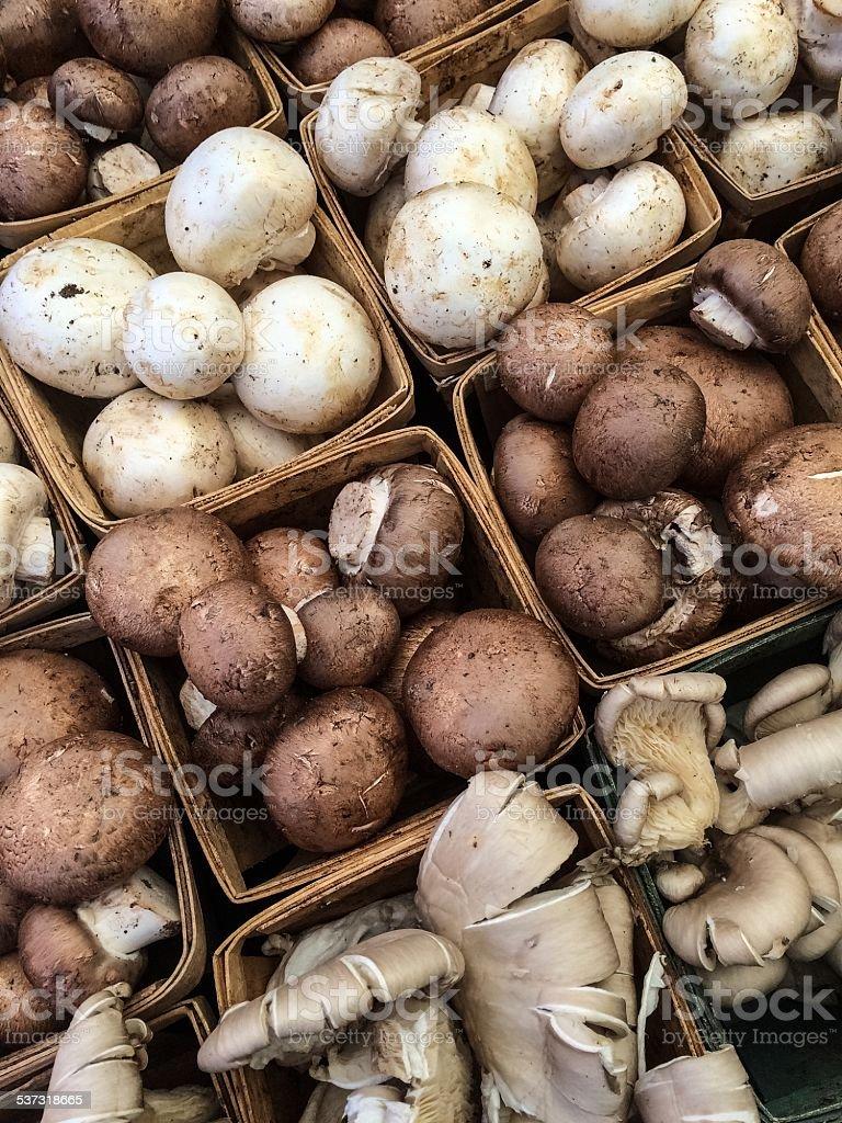 Button, Brown, and Maitake Mushrooms stock photo