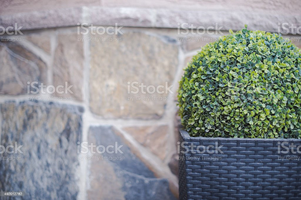 Buxus ball Garden planter detail stock photo
