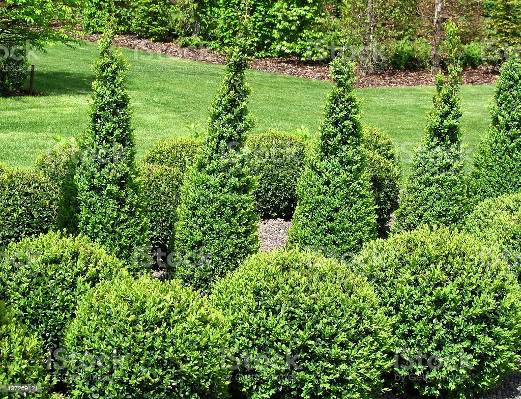 Buxus balls for sale stock photo