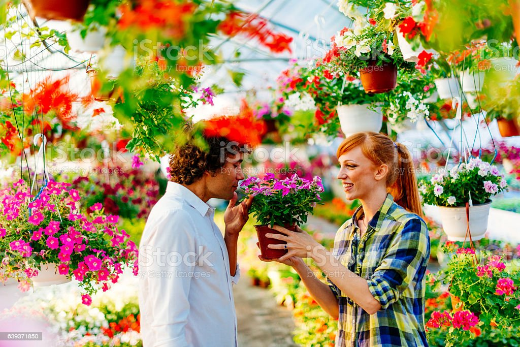 Buying potted flowers for friend's anniversary stock photo