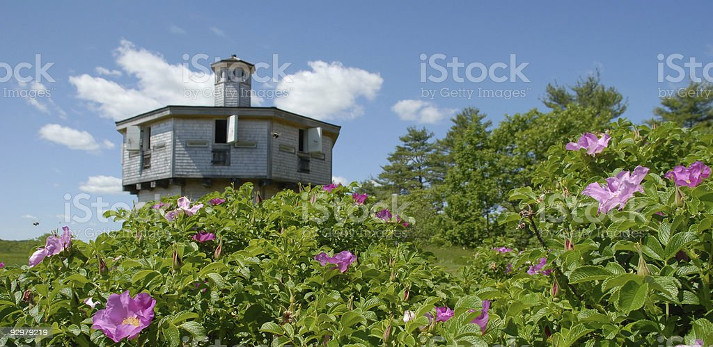 Buzzing blockhouse bees royalty-free stock photo