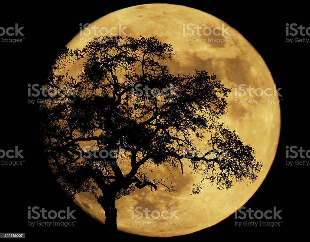 By Moonlight stock photo