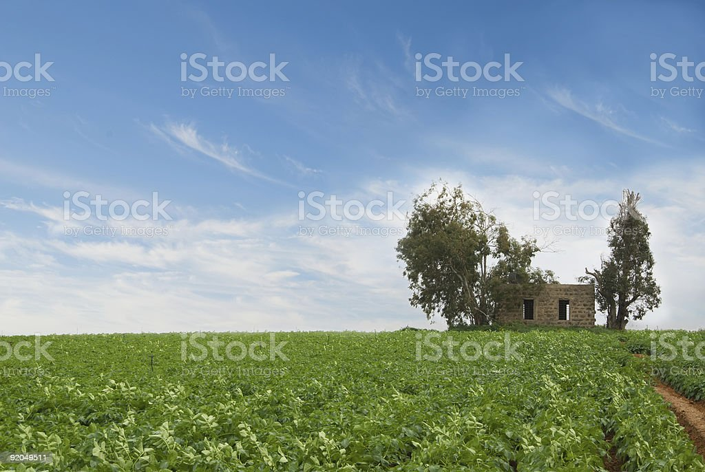 By the field royalty-free stock photo