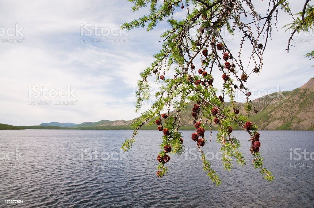 By the lake Dvargalaak. royalty-free stock photo