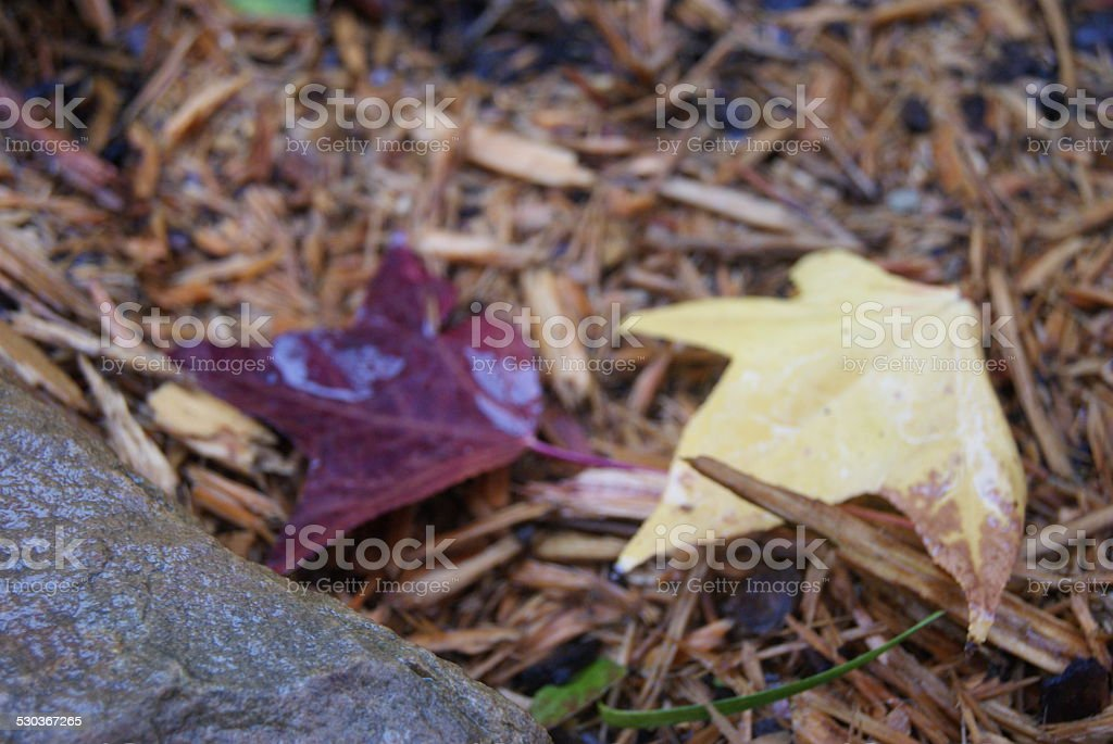 By the Path royalty-free stock photo