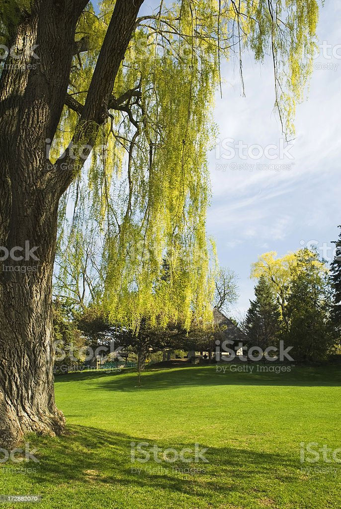 By the willow tree royalty-free stock photo
