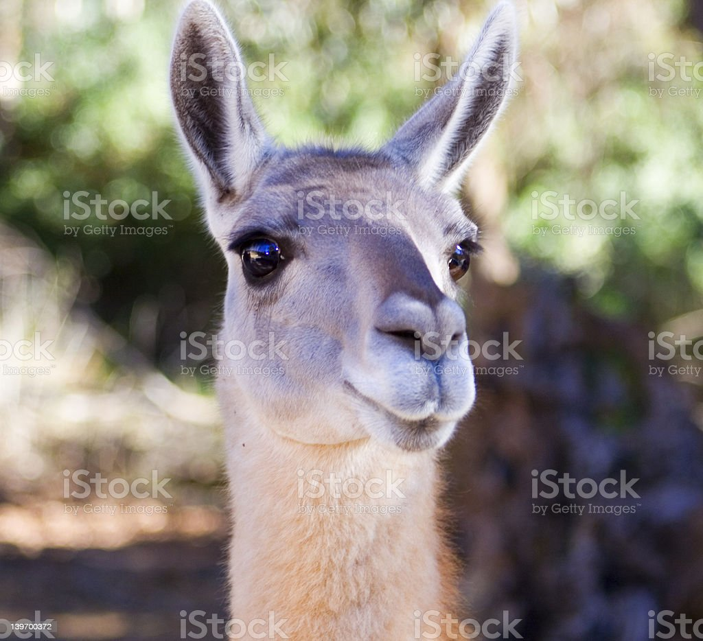 by the zoo royalty-free stock photo