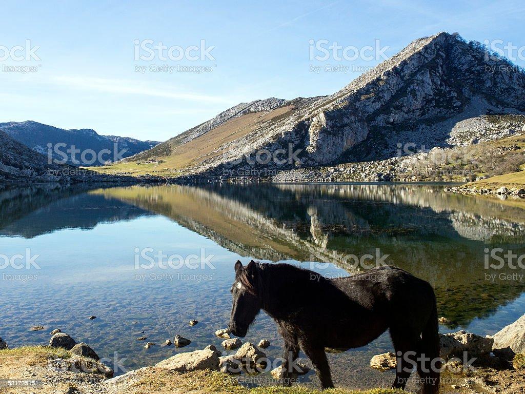Caballo en el Lago Enol stock photo