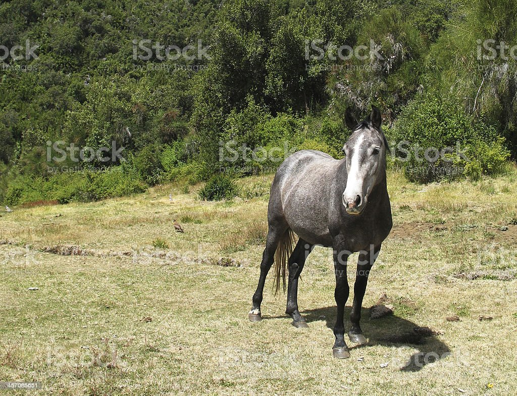 Caballo salvaje royalty-free stock photo