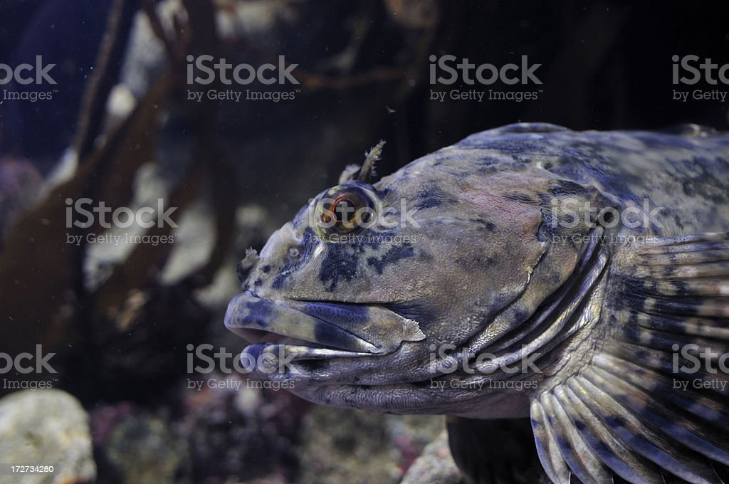 Cabazon royalty-free stock photo