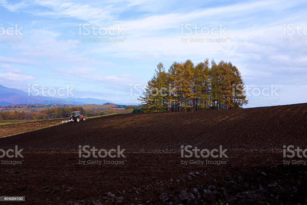 Cabbage farm in a Late autumn stock photo