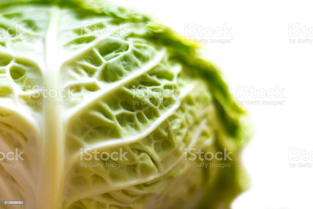 Cabbage Head Up Close, White Background, Copy Space stock photo