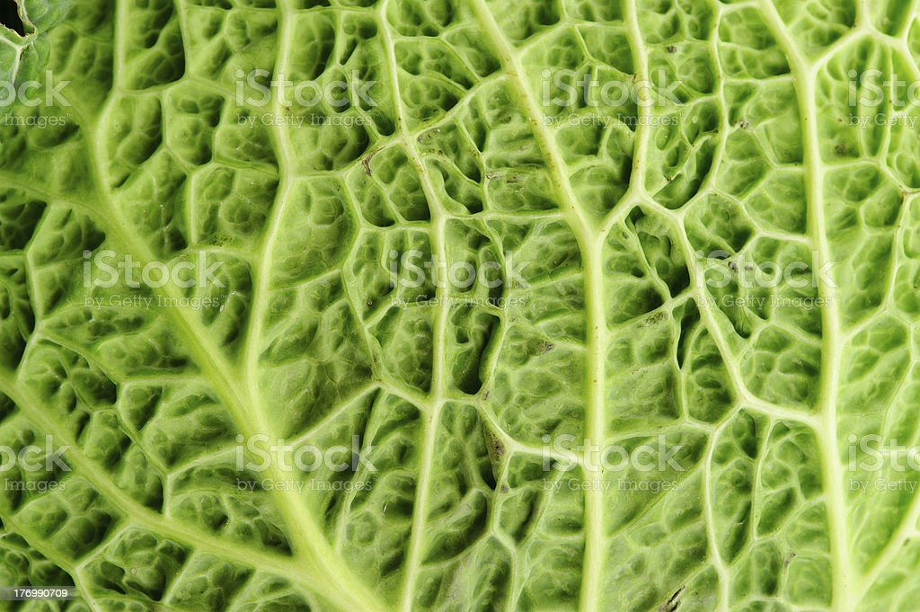 cabbage leaf royalty-free stock photo