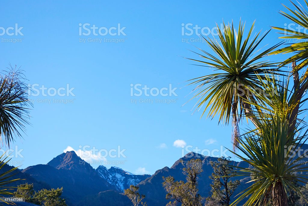 Cabbage Tree (Cordyline Australis), Mountain and Sky, New Zealand stock photo