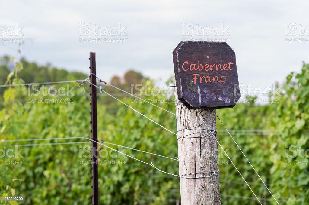 Cabernet Franc grape vines fresh after the summer rain. stock photo