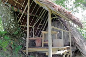 Cabin on a tree. Port Olry beach-Espiritu Santo island-Vanuatu. 7165