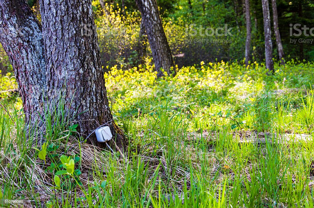 Cable connected electrical socket hanging on tree trunk in forest. stock photo