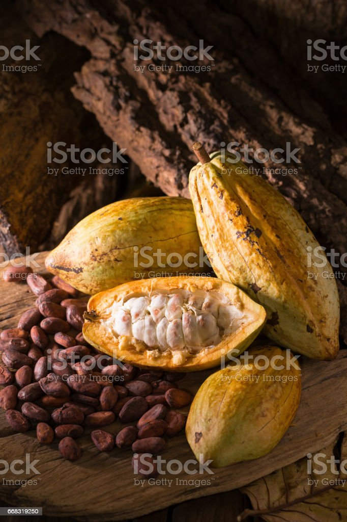 Cacao fruit, raw cacao beans, Cocoa pod on wooden background stock photo