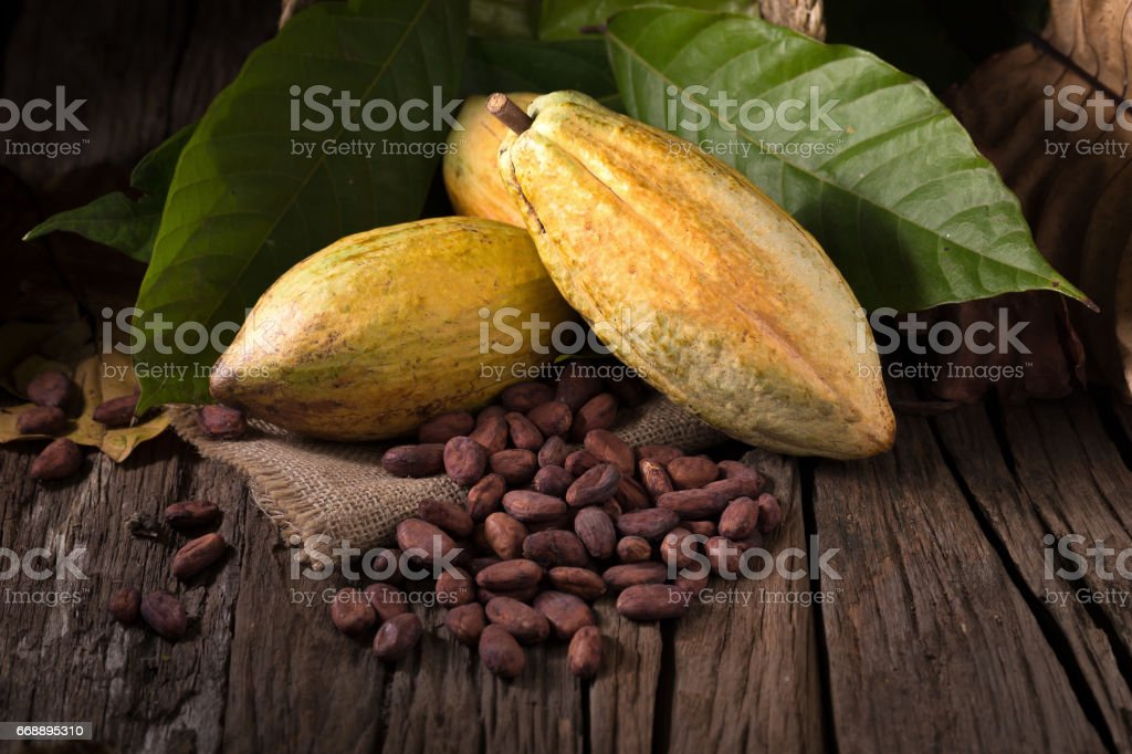 Cacao fruit, raw cacao beans, Cocoa pod on wooden background. stock photo