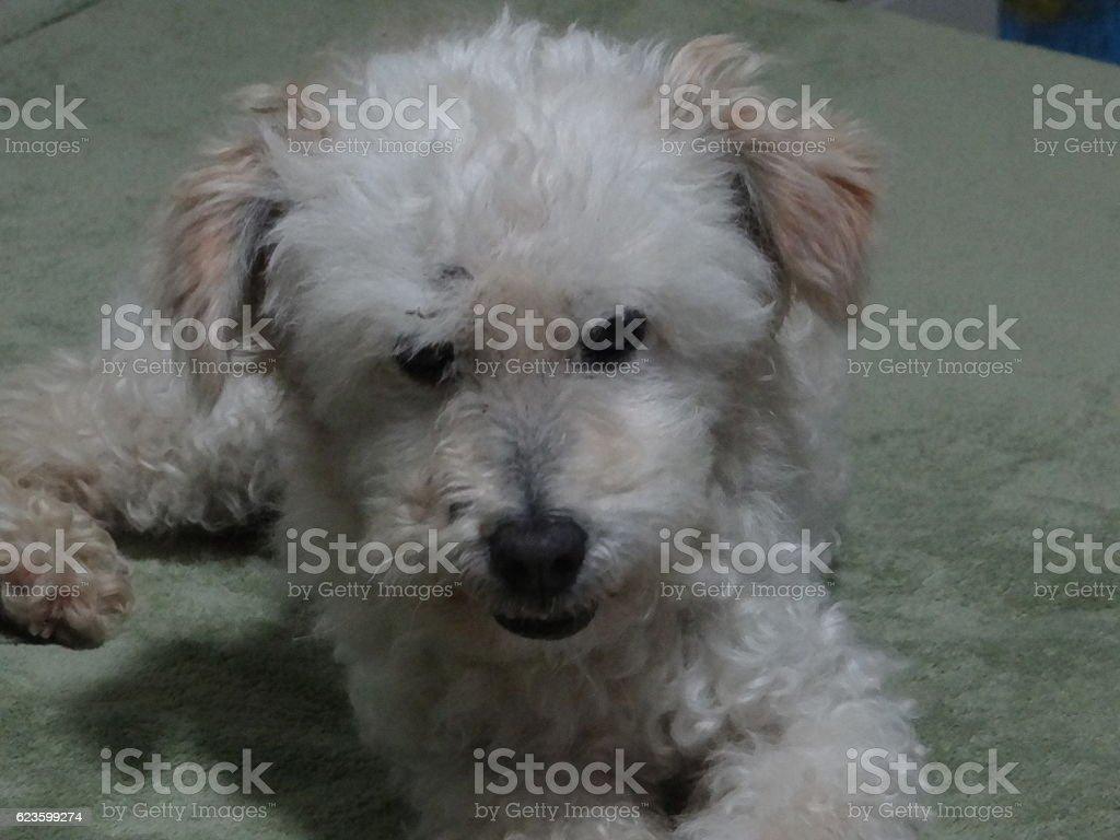 Cachorro, Dog, Perro, Hund royalty-free stock photo
