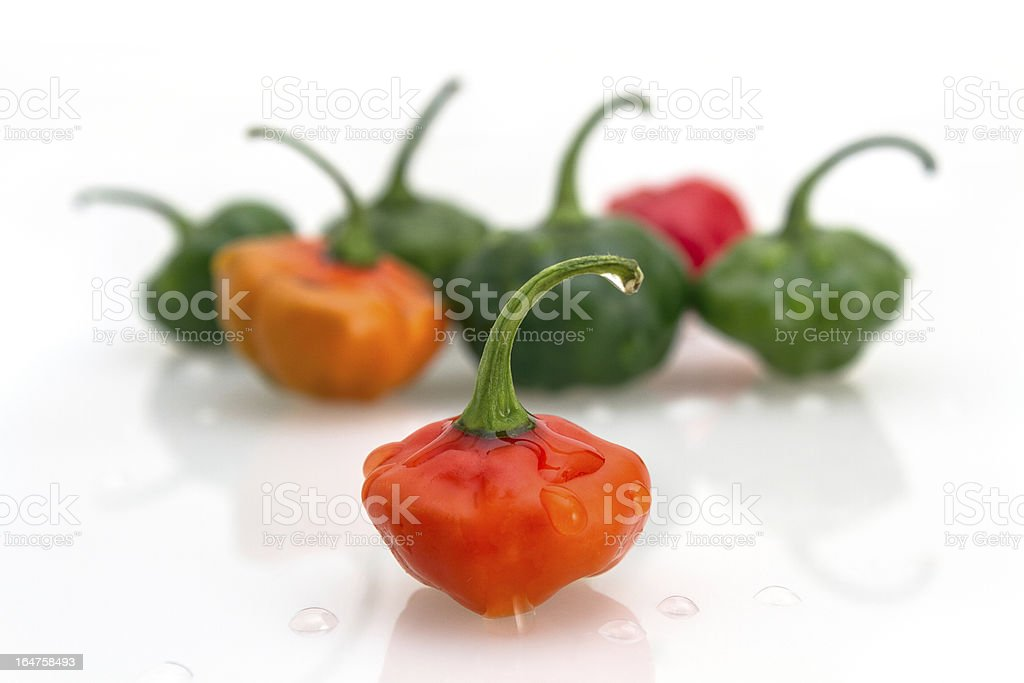 Cachucha Peppers royalty-free stock photo