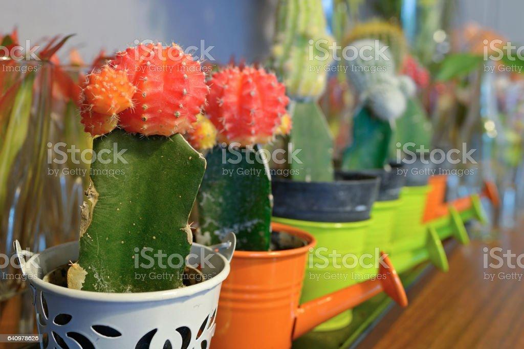 Cactaceae macro stock photo