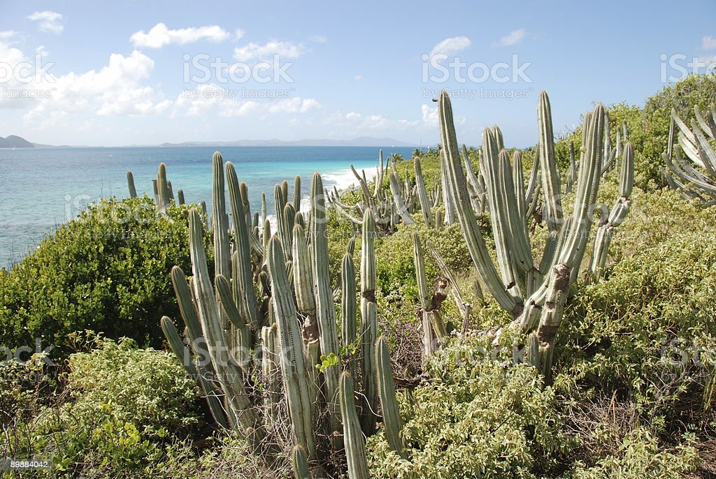 Cacti and turquoise waters royalty-free stock photo