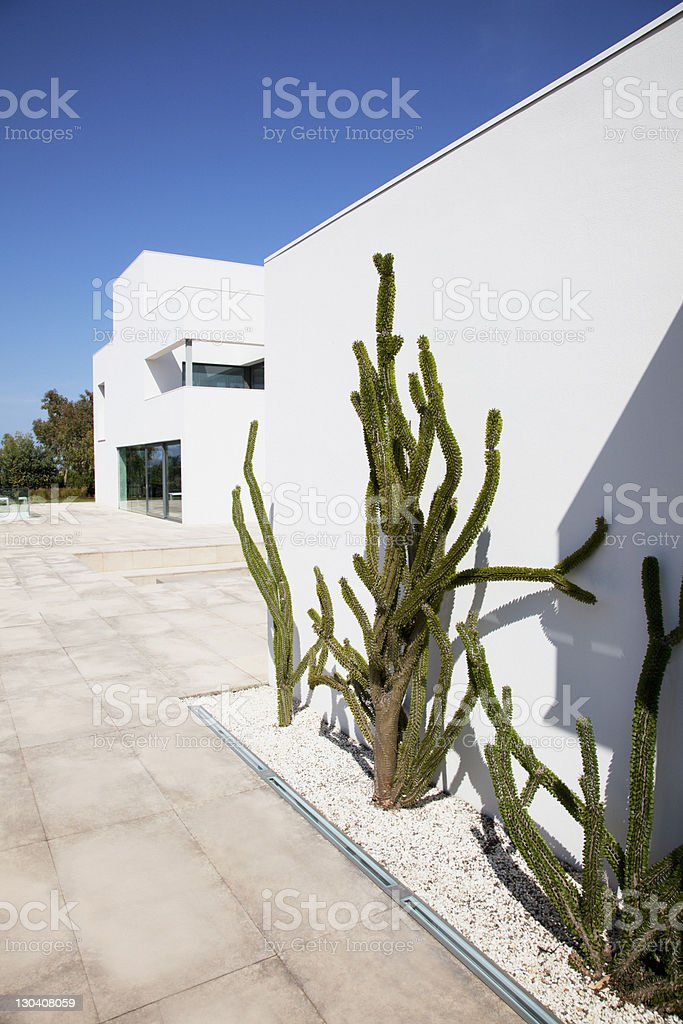 Cacti growing outside modern house royalty-free stock photo