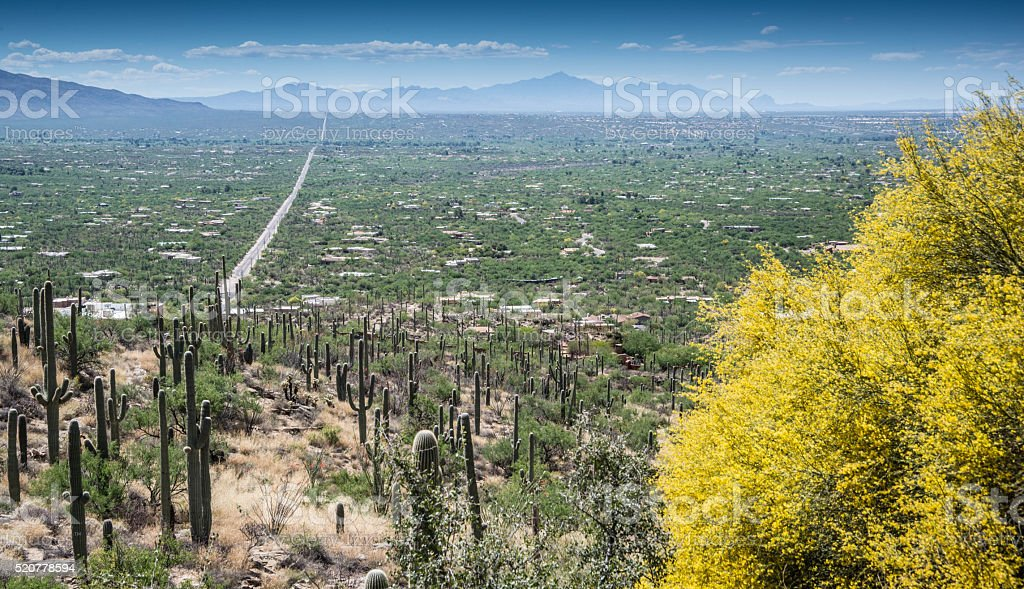 Cacti in Arizona desert stock photo