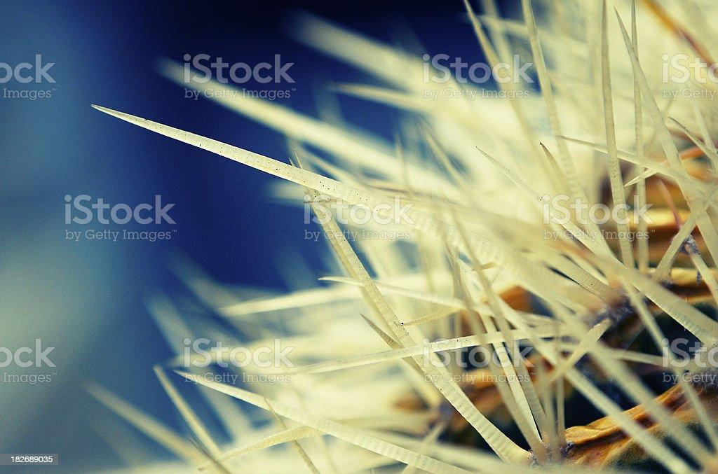 Cactus 3 stock photo