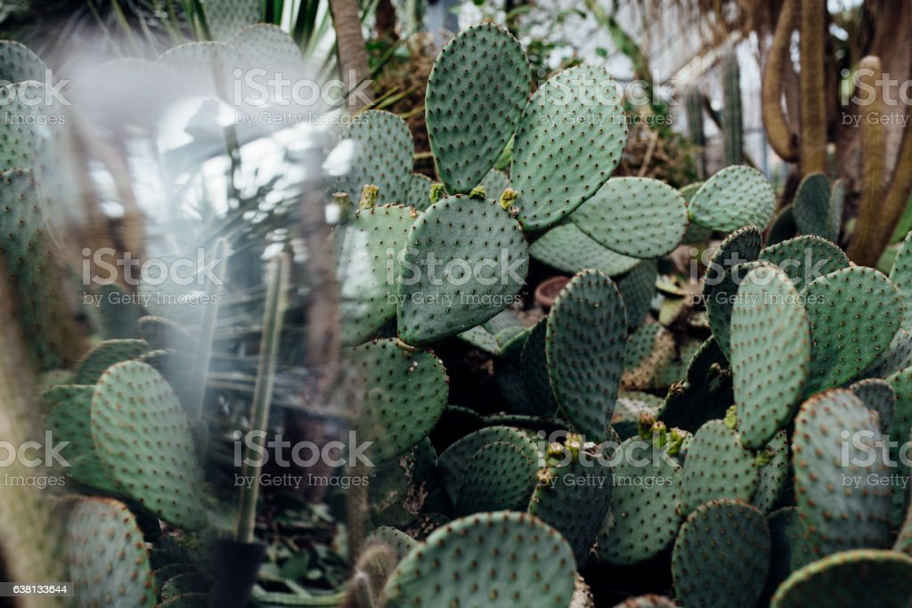 Cactus abstract stock photo